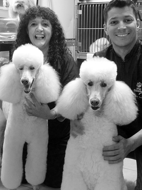 poodleparty