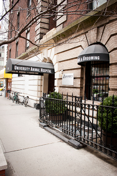 Pet Boarding | Your Pet's Second Home on the Upper East Side
